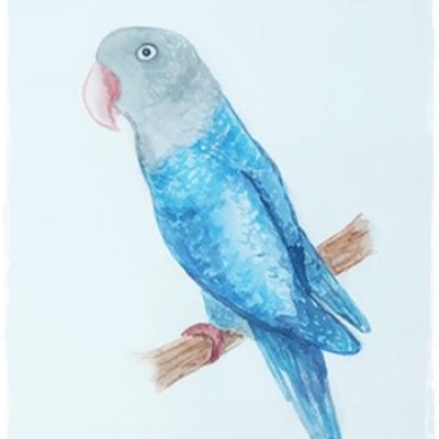 Ilustración mascota agaporni
